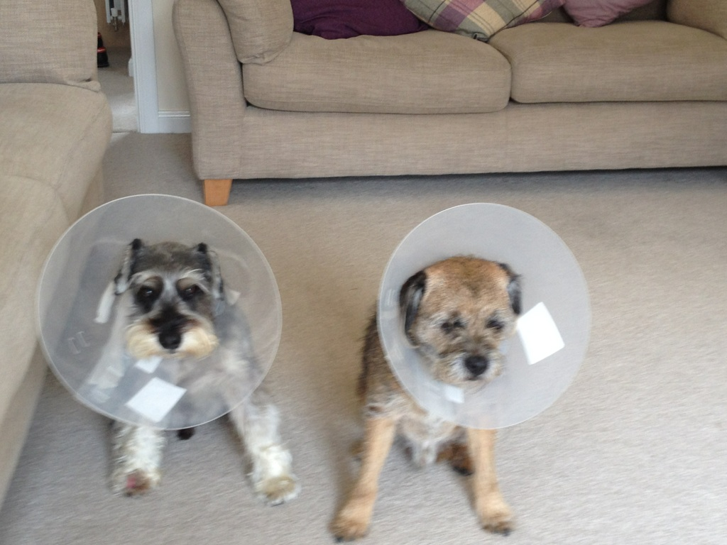 The cone brothers